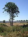 Trees and Fields near Wingfield - geograph.org.uk - 204919.jpg