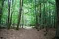 Tunbridge Wells Circular Path - Forge Wood - geograph.org.uk - 1492436.jpg