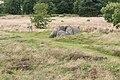 Tustrup gravpladsen (Norddjurs Kommune).Fritstående dyssekammer.8.47887.ajb.jpg