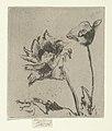 Two Flowers MET DP843933.jpg