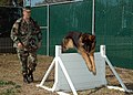 US Navy 061219-N-1522S-052 Tim, an explosive detector dog, practices his jumping skills on an obstacle course during a training session with his handler Master-at-Arms 1st Class Steven Miller.jpg
