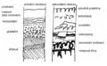 Ukázka možného zachycení půdních vrstev.png