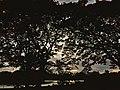 Ulsoor lake 2.jpg
