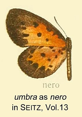 Umbra as nero inSeitzVol13.jpg
