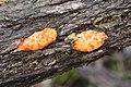 Unidentified Fungi (7174796701).jpg