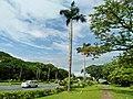 University Avenue, U.P. Diliman, Quezon City (1).jpg