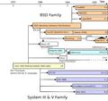 Unix timeline.en.2.png