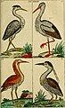 Unterhaltungen aus der Naturgeschichte (1795) (14769592253).jpg