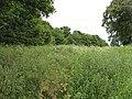 Unused land, Arkleston Road - geograph.org.uk - 1364533.jpg