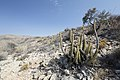 Výlet v Namib-Naukluft NP - panoramio (1).jpg