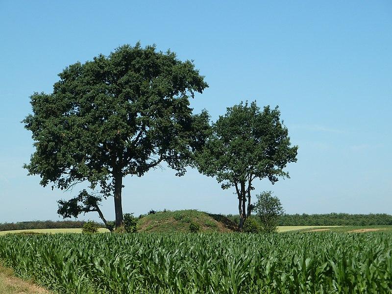 Tumulus de Vechmaal, Vechmaal, Heers, Belgique