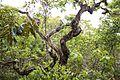 Vegetação do cerrado no Parque Nacional da Chapada dos Guimarães em Mato Grosso.jpg