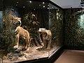 Verona, museo civico di storia naturale, sale, zoologia 02.jpg
