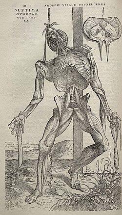 Andreas Vesalius Wikipedia