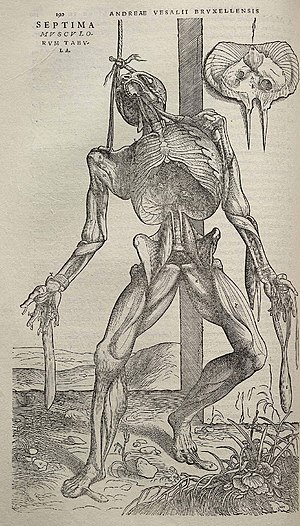 Andreas Vesalius - Vesalius's Fabrica contained many intricately detailed drawings of human dissections, often in allegorical poses.