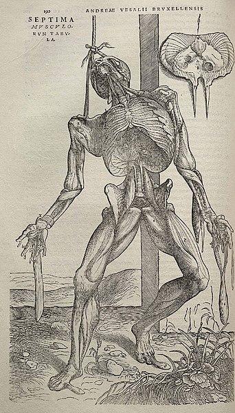 Vesalio,el anatomista que abría los cuerpos de los ahorcados ...