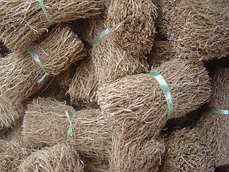 Chrysopogon zizanioides - Vetiver roots on sale