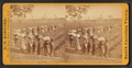 View of laborers returning from picking cotton at sunset, on Alex. Knox's plantation, Mount Pleasant, near Charleston, S.C, by Barnard, George N., 1819-1902.png