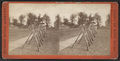 View of rifles displayed on the field, by Pach, G. W. (Gustavus W.), 1845-1904.png