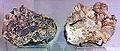 Vuursteenbreksies, Brunssum, geologische collectie, Museum Het Land van Valkenburg, Limburg.jpg