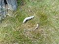 Vylet na Ostry, Sumava - 9 cervenec 2011 115.jpg