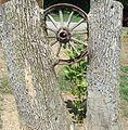 WagonWheelInTree-ChainOLakesStatePark-Indiana.jpg