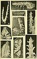 Walcott Cambrian Geology and Paleontology II plate 23.jpg
