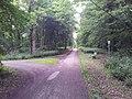 Wald bei Schwegenheim - geo.hlipp.de - 25653.jpg