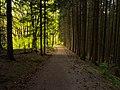 Wald im Nationalpark Eifel, Deutschland.jpg