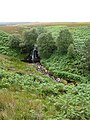 Waterfall on the Linn Burn, Hexhamshire Common - geograph.org.uk - 94266.jpg