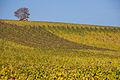 Weininsel 2014 18.jpg
