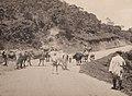 Werner Haberkorn - Caminho Para Serraria, Acervo do Museu Paulista da USP (cropped).jpg