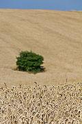 Wheat fields in Ukraine-5963.jpg