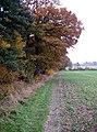 Where arable and woodland meet. - geograph.org.uk - 280036.jpg