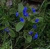 Whf blue 02.jpg