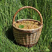 White currants in basket 2020 G1.jpg