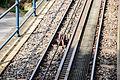 Wiesbaden Nerobergbahn Gleis Detail 2010-05-01 16.58.13.jpg