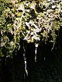 WikiProjekt Landstreicher Wasserfall Hinang 40.jpg