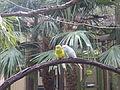 Wild Adventures Bird House 102013 1.JPG