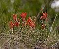 Wild Flowers (3679128221).jpg