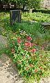 Wild flowers in Bradford Cathedral graveyard (7288429726).jpg