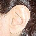 Wildermuth's Ear (left).jpg