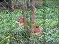 Wildlife Safari - 3.jpg