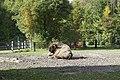 Wildpark Bruderhaus - panoramio (3).jpg