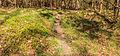 Wildwissel. Locatie, Kroondomeinen.jpg