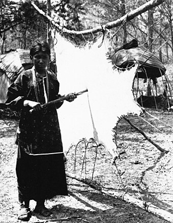 A Ho-Chunk woman scraping meat from a deer hide in order to tan it, 1880