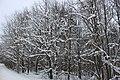 Winter forest - panoramio (4).jpg