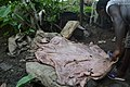 Woman processing cow skin 05.jpg