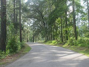 Wooded road at Caney Lake IMG 2184 1