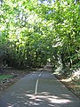 Woodland, Beredens Lane, Great Warley - geograph.org.uk - 54474.jpg